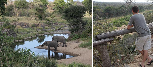 The Other Animals Safaris​ -open vehicle safari's - Kruger National Park